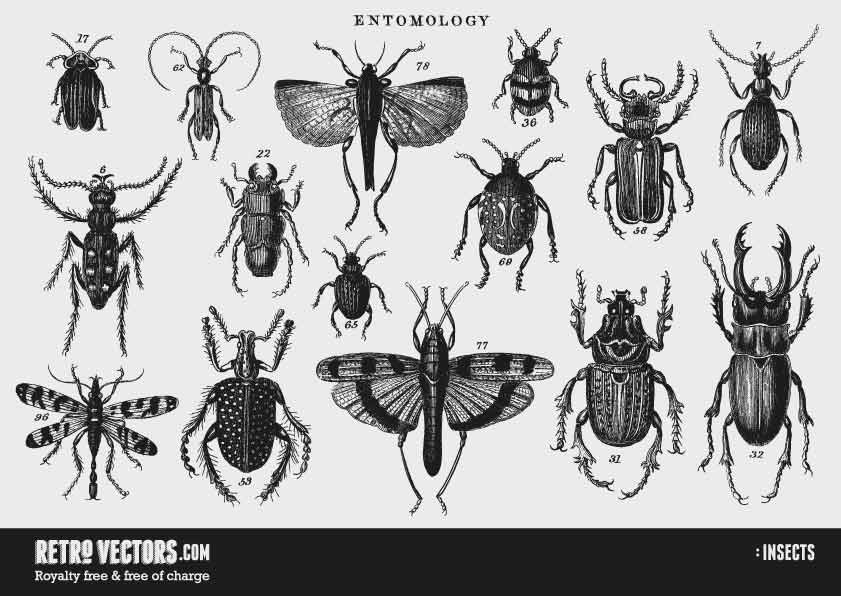 Insects | Free Retro Vectors