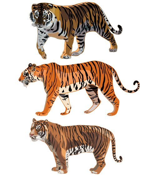 Set of Tiger vector picture art 12