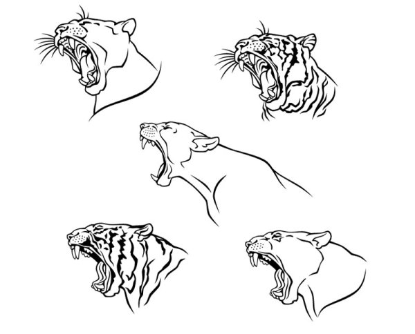 Set of Tiger vector picture art 10