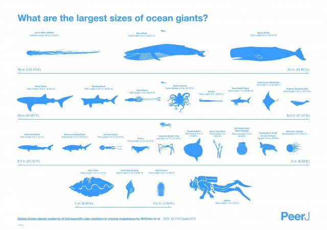 What Are The Largest Sizes of Ocean Giants? [Infographic] | Daily Infographic