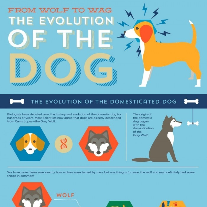 Woof Woof: The Evolution of the Dog [Infographic] | Daily Infographic