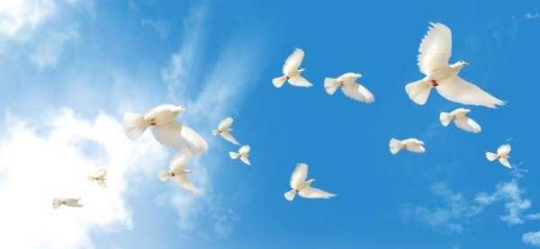 the main theme of pigeons psd material -3