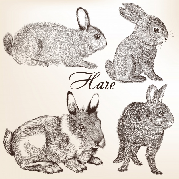 Hand drawn hares collection Vector | Premium Download