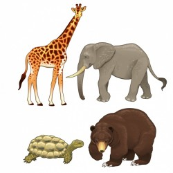 Wild animals collection Vector   Free Download
