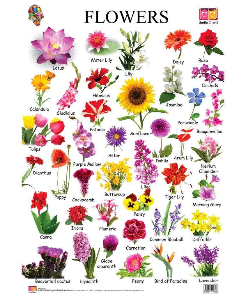 List Of Flower Names And Meanings Flowers