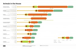 Animals in the House [Infographic]