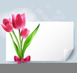 Blank paper vector pictures