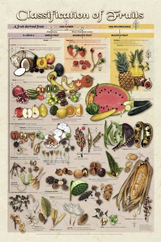Classification of Fruits