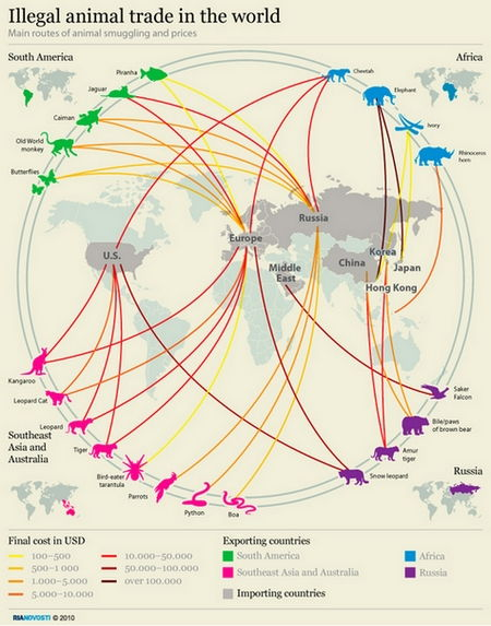 Illegal animal trade in the world