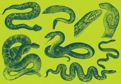 Old Style Drawing Snake Vectors