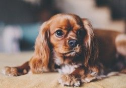 Download Wallpaper Dog, Puppy, Muzzle HD Background
