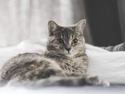 Download Wallpaper 1600×1200 Cat, Lying, Home 1600×1200 HD Background