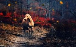Horse Alone Wallpapers