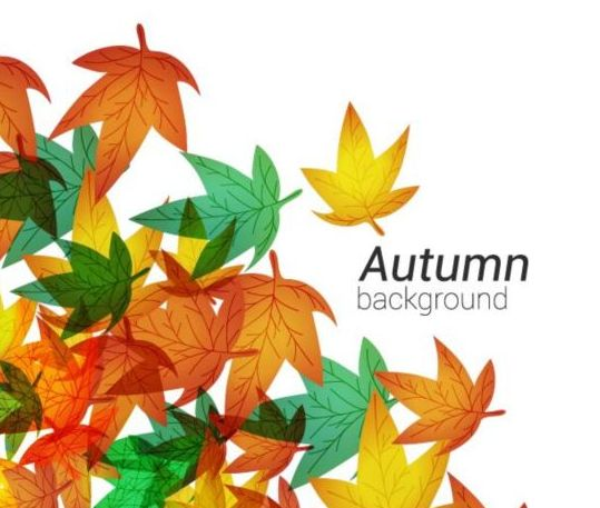Autumn leaves with white background vector 01