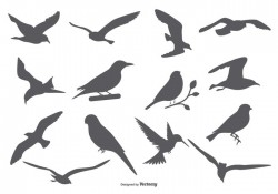 Bird Vector Silhouettes