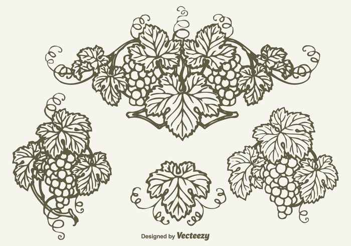 Free Drawn Bunch Of Grapes Vector Design