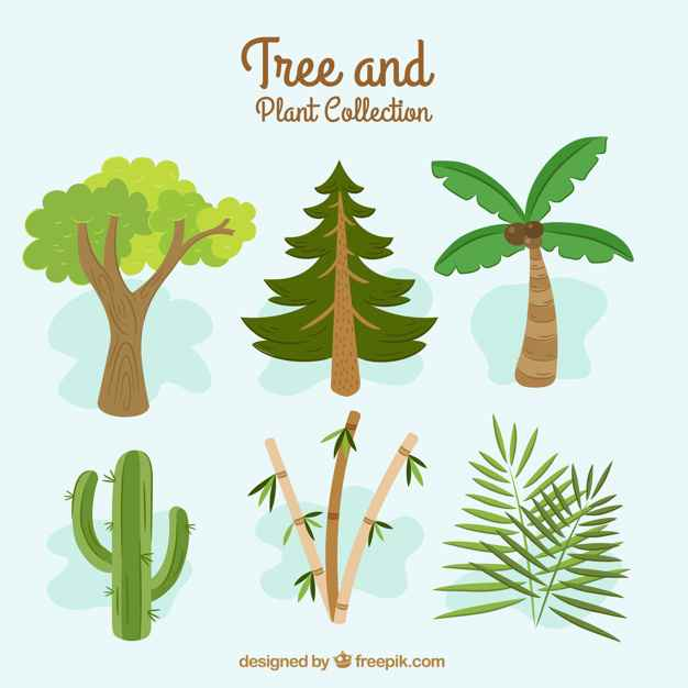 Great collection with different types of trees