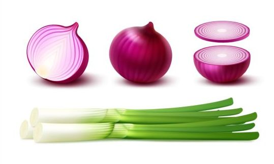 Onion slice with gree vagetables vector 03