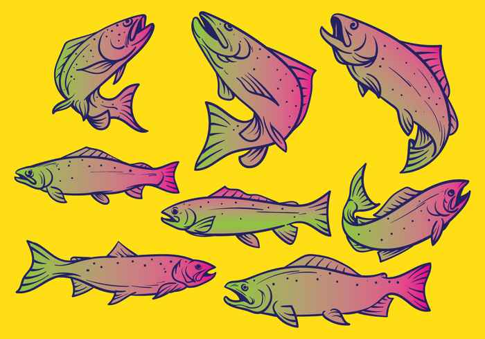 Trout Fish Vector Illustration