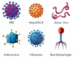 Six types of viruses on white background