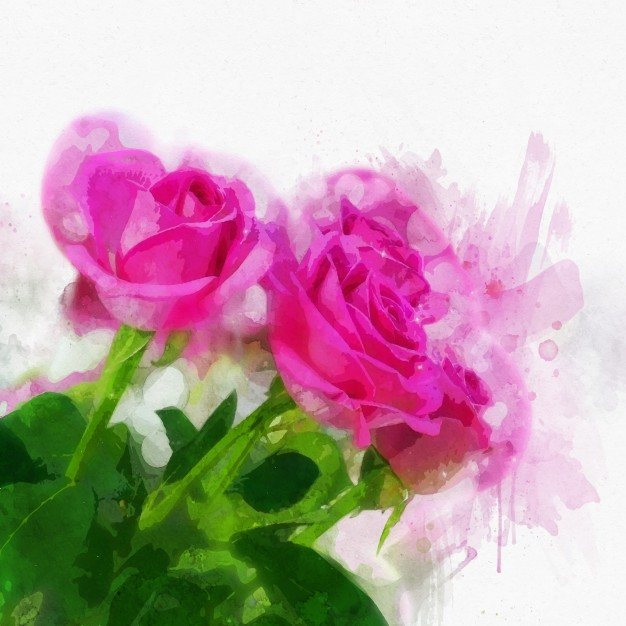 Pink roses in painted watercolour style