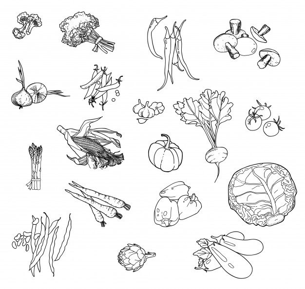 Set of hand-drawn vegetables for your design