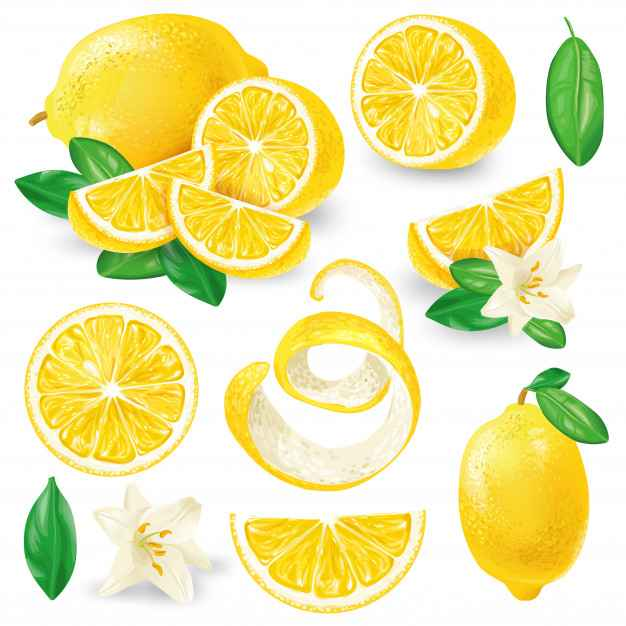 Different lemons with leaves and flowers vector