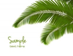 Green palm leaves backgrounds vector 02