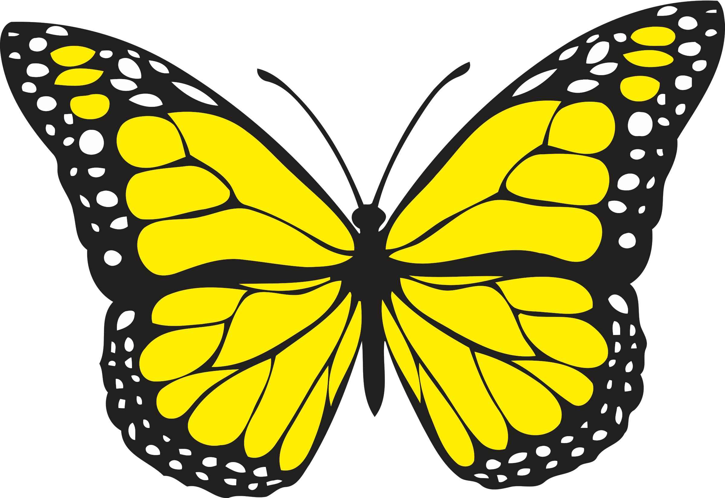 Butterfly 1 (colour) Icons PNG