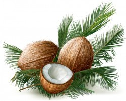 Coconuts with palm leaves