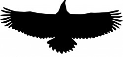 Eagle Wingspan Silhouette Icons PNG