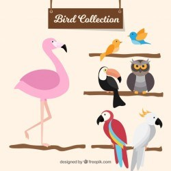 Flat bird collection
