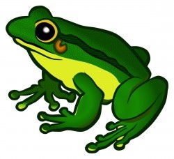 frog – coloured Icons PNG