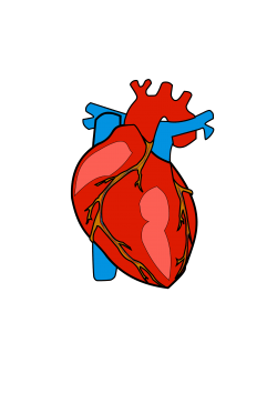 HUMAN HEART Icons PNG