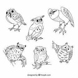 Outline owl collection of six