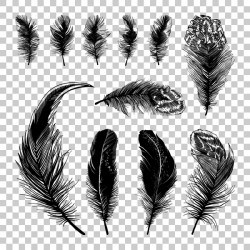 Hand drawn black feather vecors 03