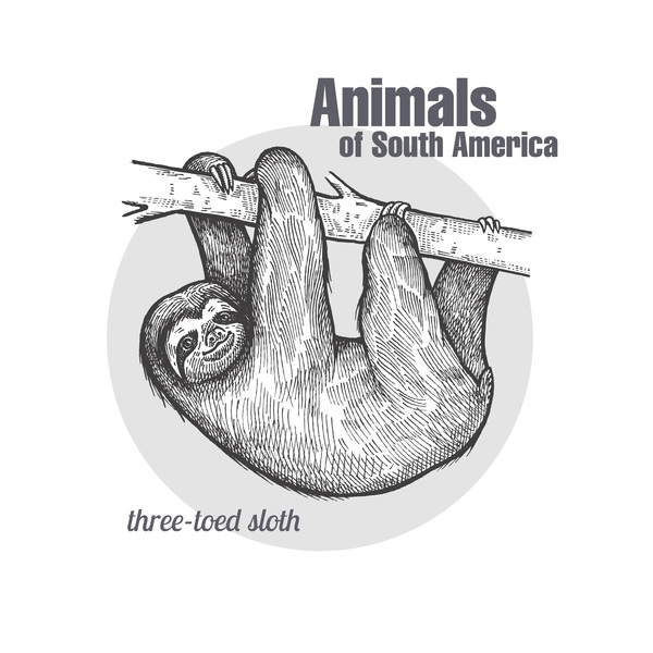 Animals of South America Sloth