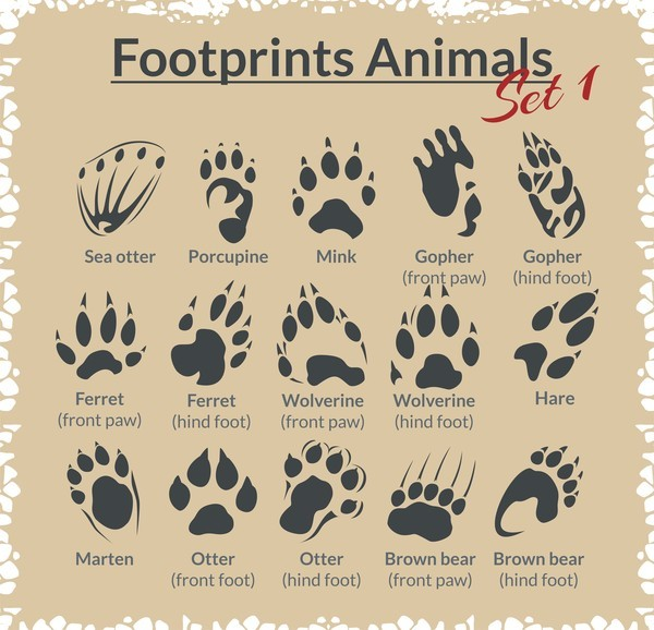 Animal footprints design set vector 04