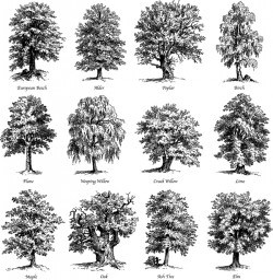 Various tree silhouette vectors set 03