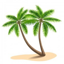 Realistic palm tree illustration vectors 11