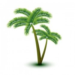 Realistic palm tree illustration vectors 12