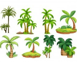 tropical tree illustration vector 04