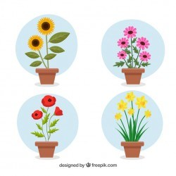 Flower pot collection with flat design