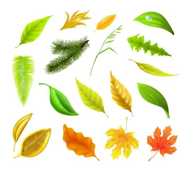 Autumn leaves set vector 01