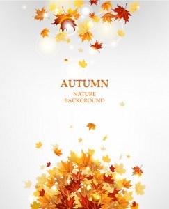 Autumn leaves with nature background vectors