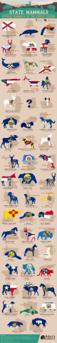 State Mammals: Official Mammals of the United States
