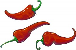 3 red pepper vector illustration