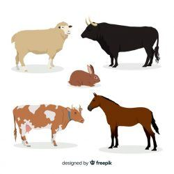 Farm animal collection in flat style