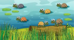 A group of turtles in the river