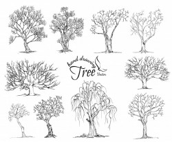Hand drawn tree isolated on white background Vector